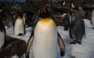 penguins-1606419_1920-min